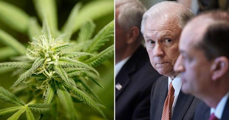 Cannabis vs. Jeff Sessions