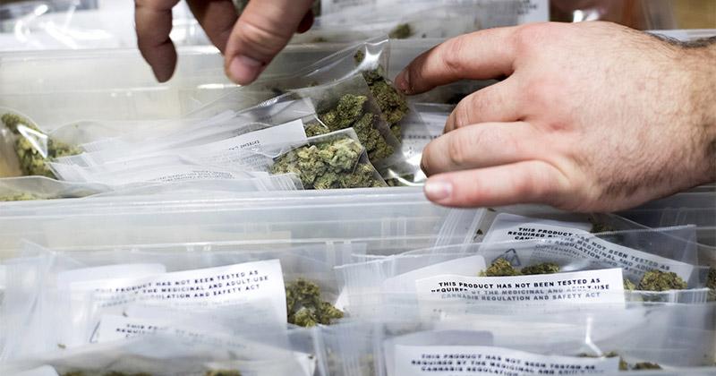 Légalisation du cannabis et violences