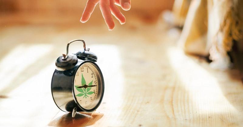 Pause du cannabis