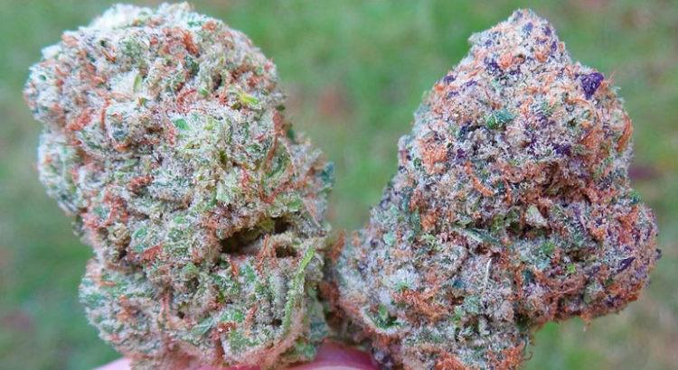 Variétés de cannabis connues
