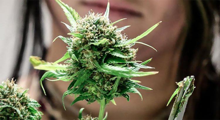 Investir dans le cannabis en 2018