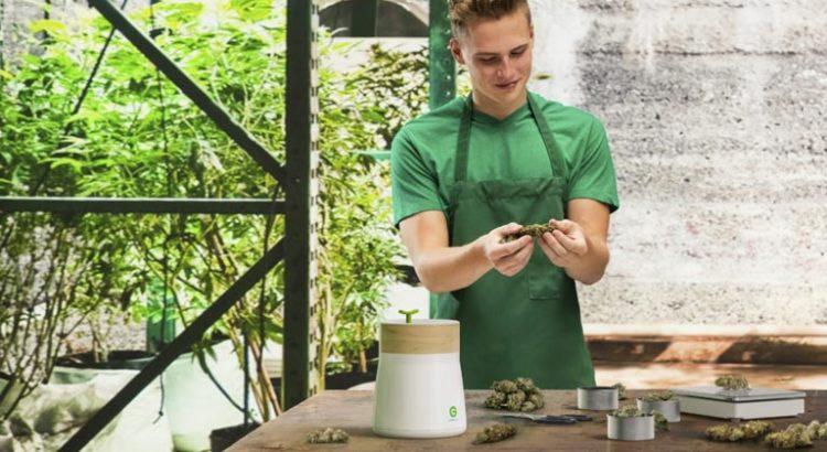Testing de cannabis