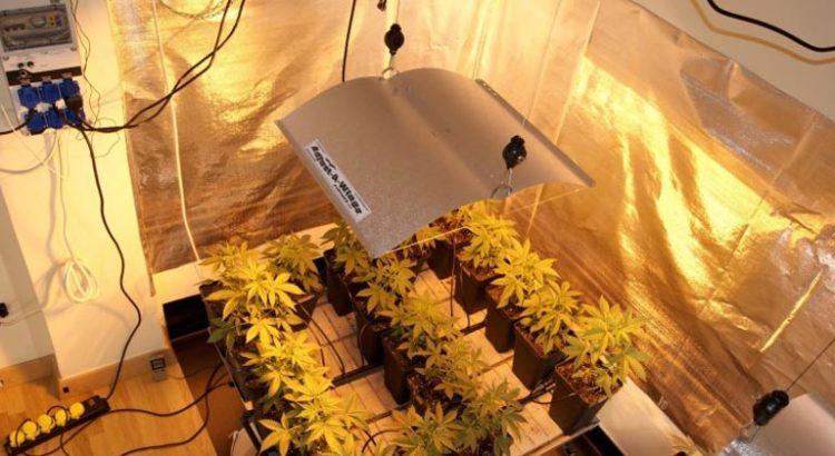 Autoculture de cannabis en Argentine