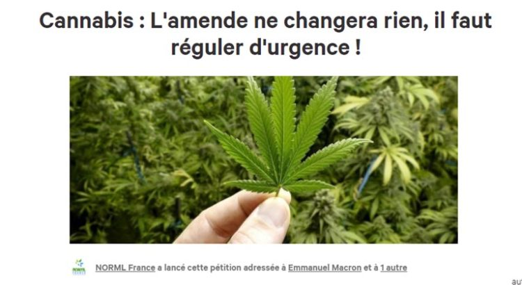 Pétition de NORML France sur le cannabis