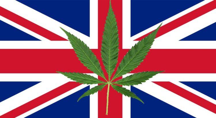 Royaume-Uni producteur de cannabis en Europe