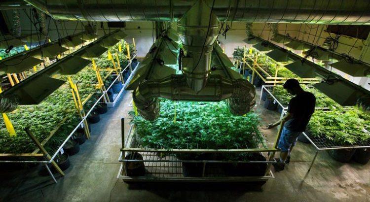 Colombie sortie du livre cuisiner avec du cannabis de for Livre culture cannabis interieur pdf