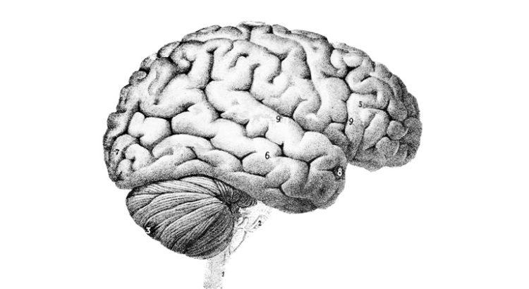 Huile essentielle de chanvre sur le cerveau
