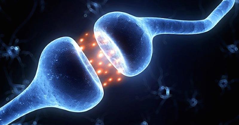 GPR55, le 3ème récepteur endocannabinoïde