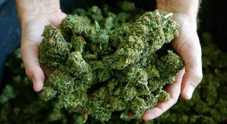 Expérience sur le cannabis en Suisse