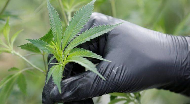 Ventes de cannabis au Canada