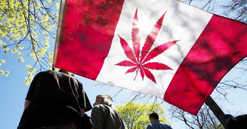 Le Sénat vote la légalisation du cannabis au Canada