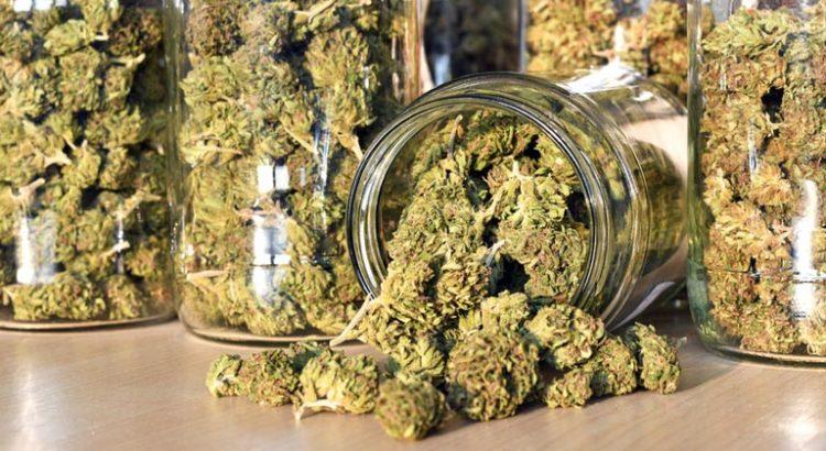MILDECA va contrôler les magasins de cannabis