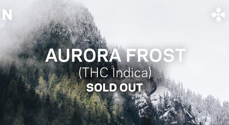 aurora frost