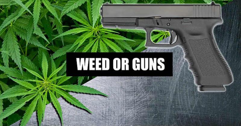 cannabis arme