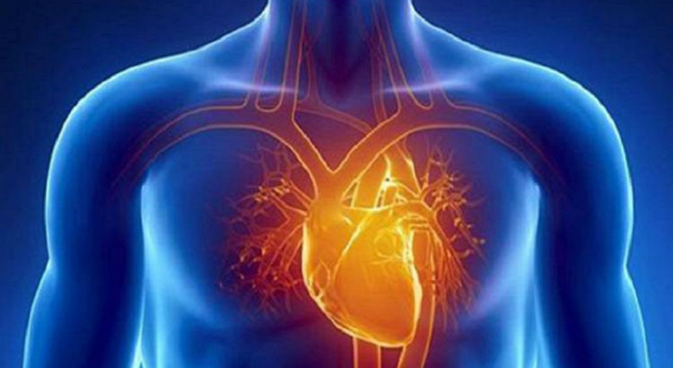 cannabis crise cardiaque