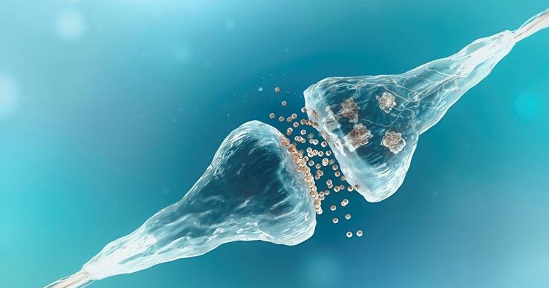 Homéostasie et cannabis