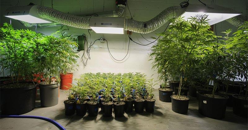 Scotts Miracle Gro et cannabis