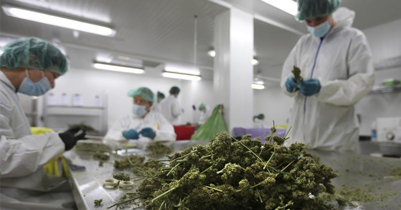 Test du cannabis en Californie
