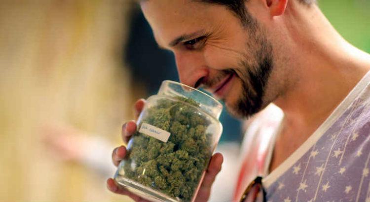 goûteurs de cannabis