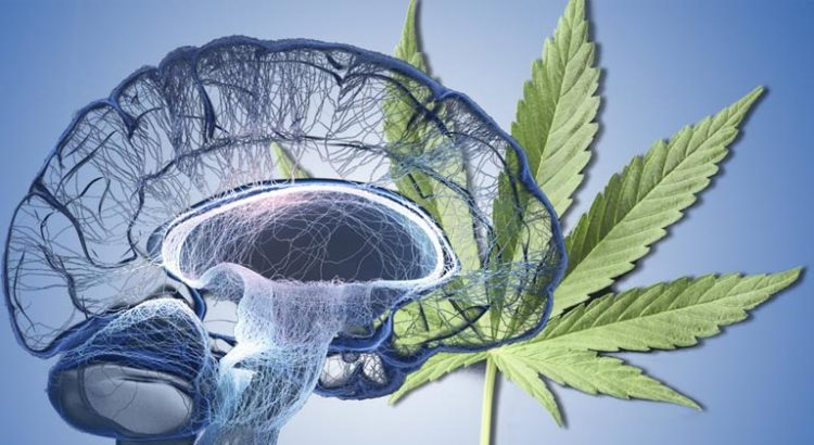 Cannabis et neurones