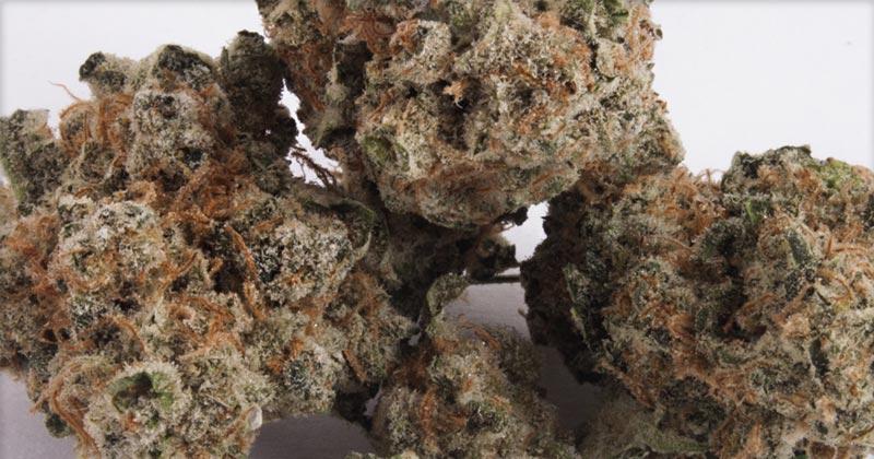 Variétés de cannabis au goût raisin