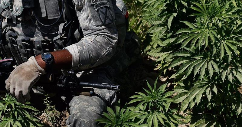 Cannabis médical pour les vétérans