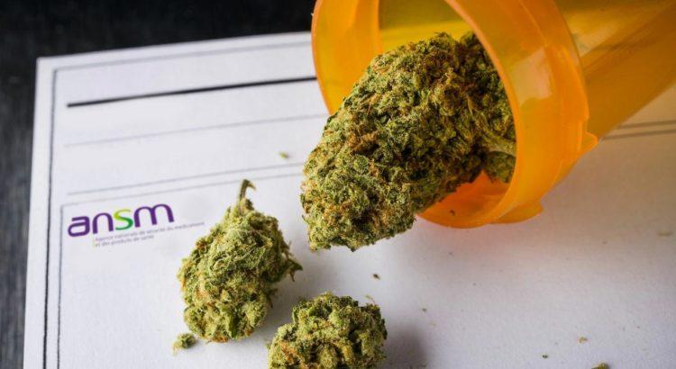 ANSM et cannabis médical
