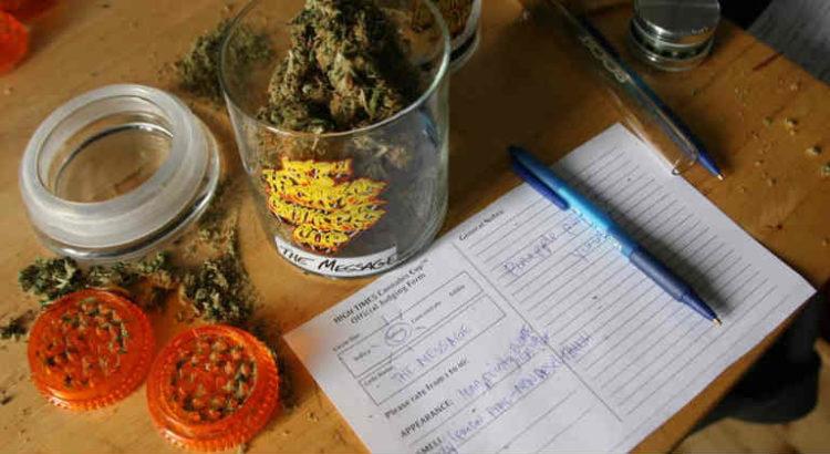 être juge coupe cannabis