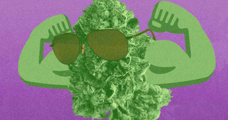 les weed les plus fortes
