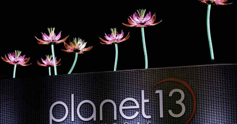 planet 13 lotus
