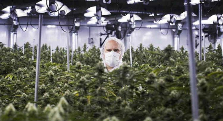 cannabis facility