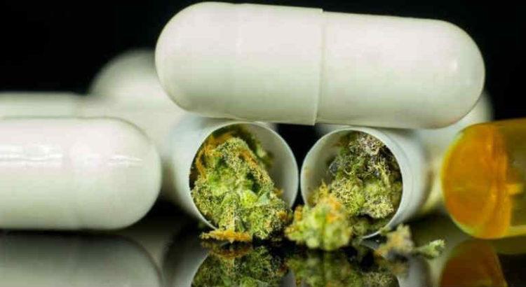 gélules cannabis médical