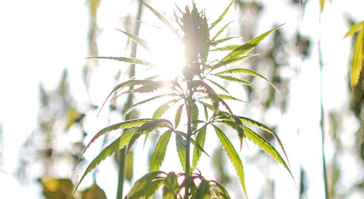 Cannabis thérapeutique à l'Assemblée Nationale