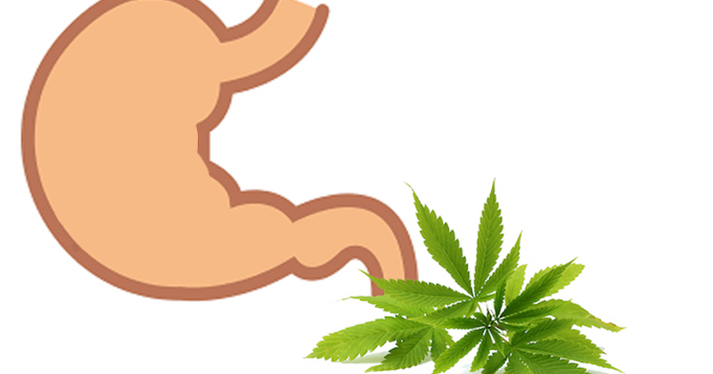 CBD et THC dans l'estomac