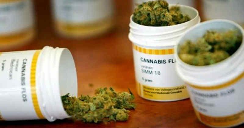 bedrocan fleurs cannabis