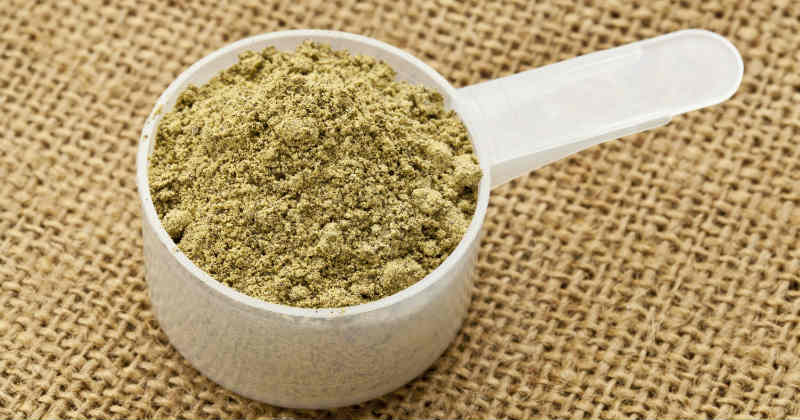 protéine de chanvre en poudre