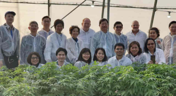 délégation thaïlandaise en Israel cannabis médical