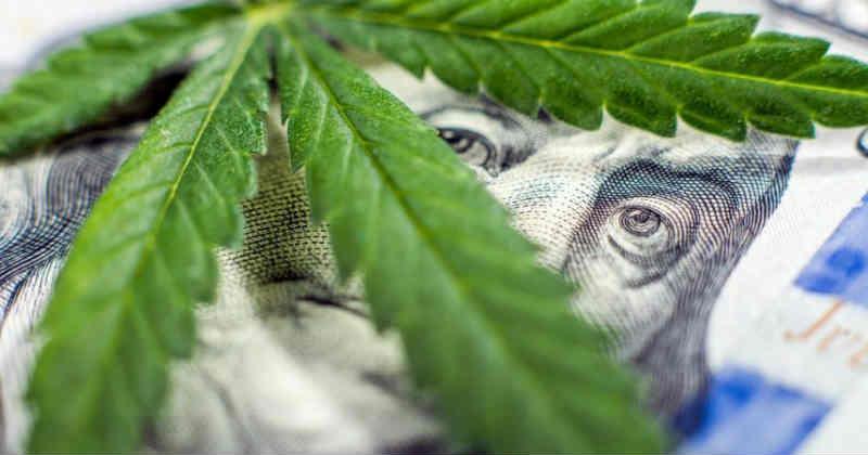 cannabis industrie