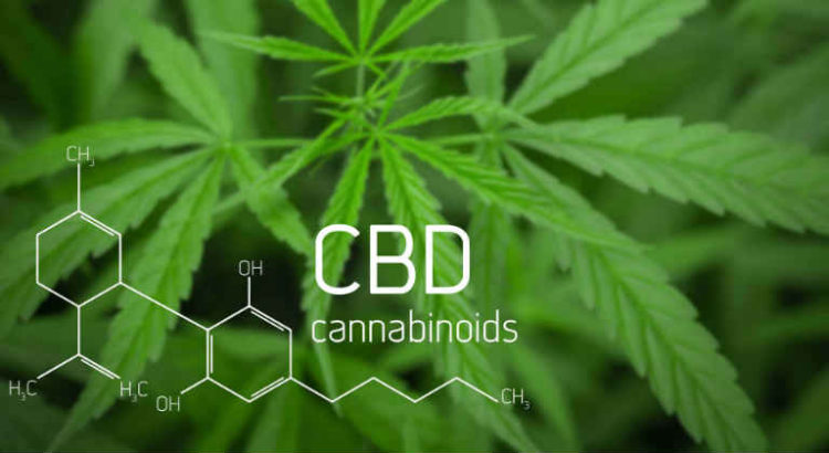 cbd synthetique