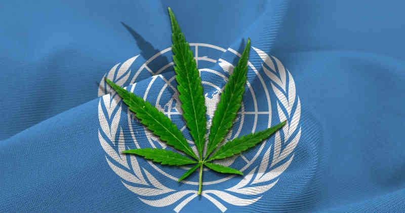 ONU OICS cannabis
