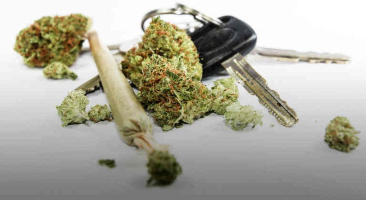 cannabis et conduite automobile