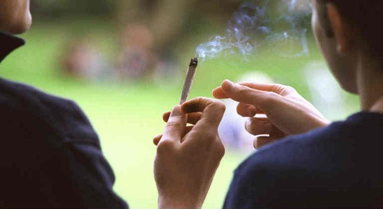 consommation cannabis israel
