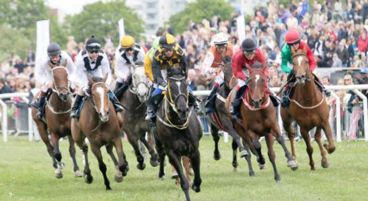 course cheval cbd