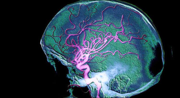 barrière hémato encéphalique cerveau CBD