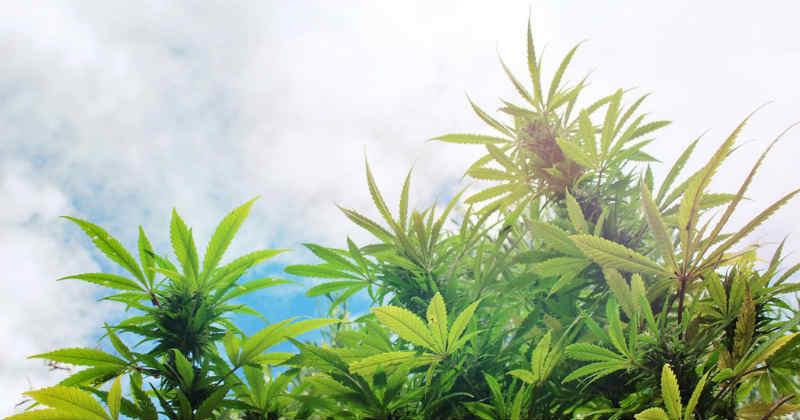 légalisation cannabis france