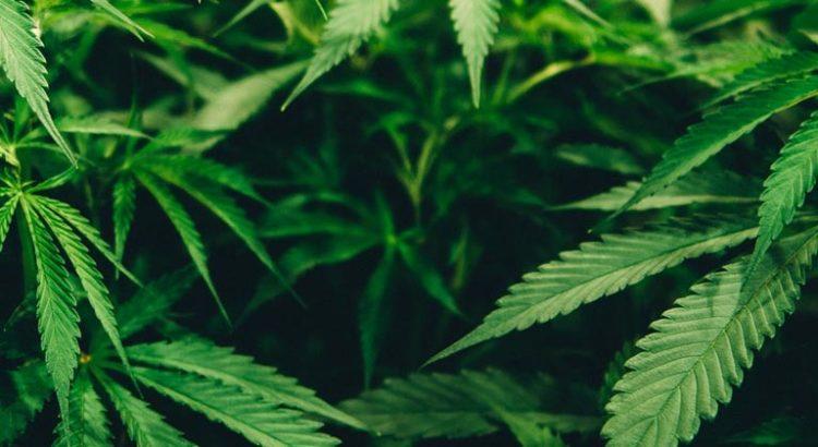 Cannabis médical au New Jersey