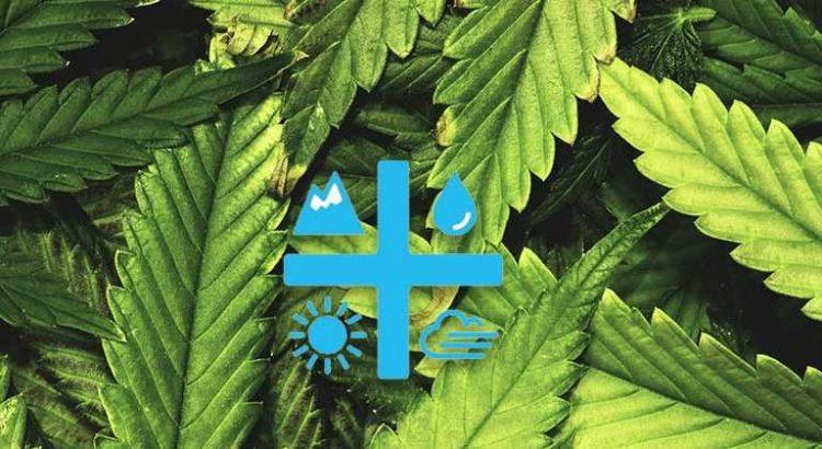 Aurora Cannabis achète l'entreprise de chanvre Hempco Food and Fibre