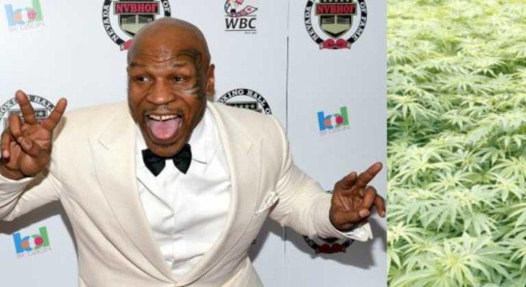Mike Tyson dit qu'il dépense chaque mois 40 000 dollars de cannabis dans son ranch