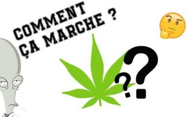 Comment fonctionne le cannabis