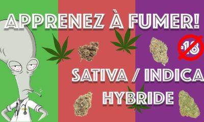 Différences Indica, Sativa et Hybride